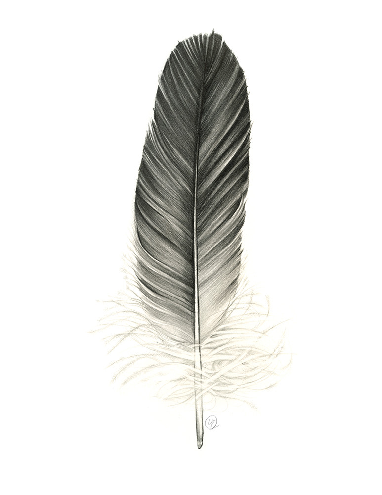 Small Eagle Feather.jpg