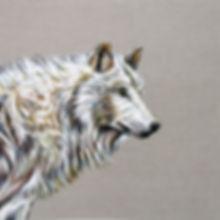 The Matriarch  -  White Wolf.jpg