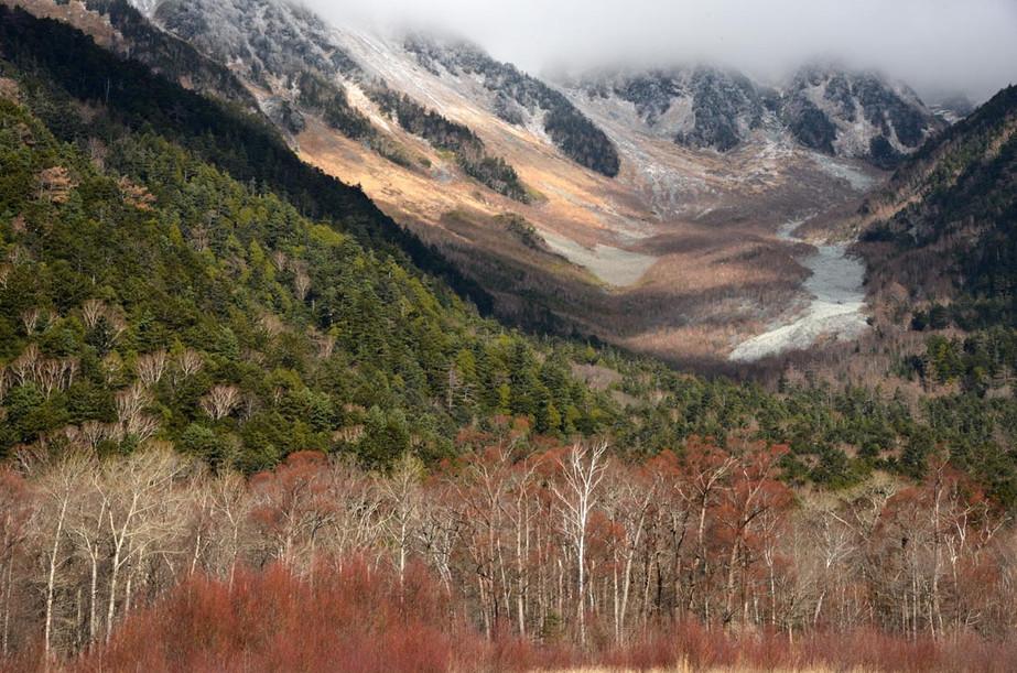 穂高連峰を背景にケショウヤナギ