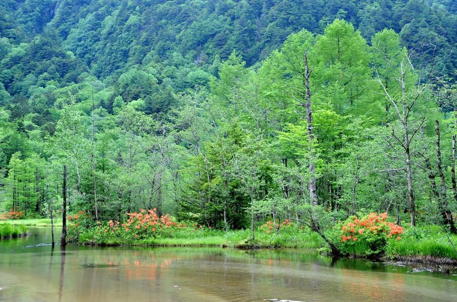 レンゲツツジ咲く田代池