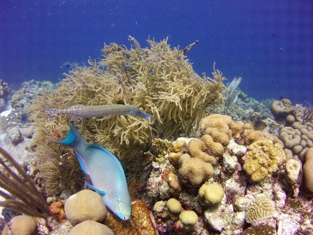 trumpetandparrotfish