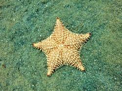 Star Honduras