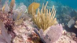 coral reef florida