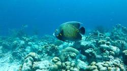 anglefish2