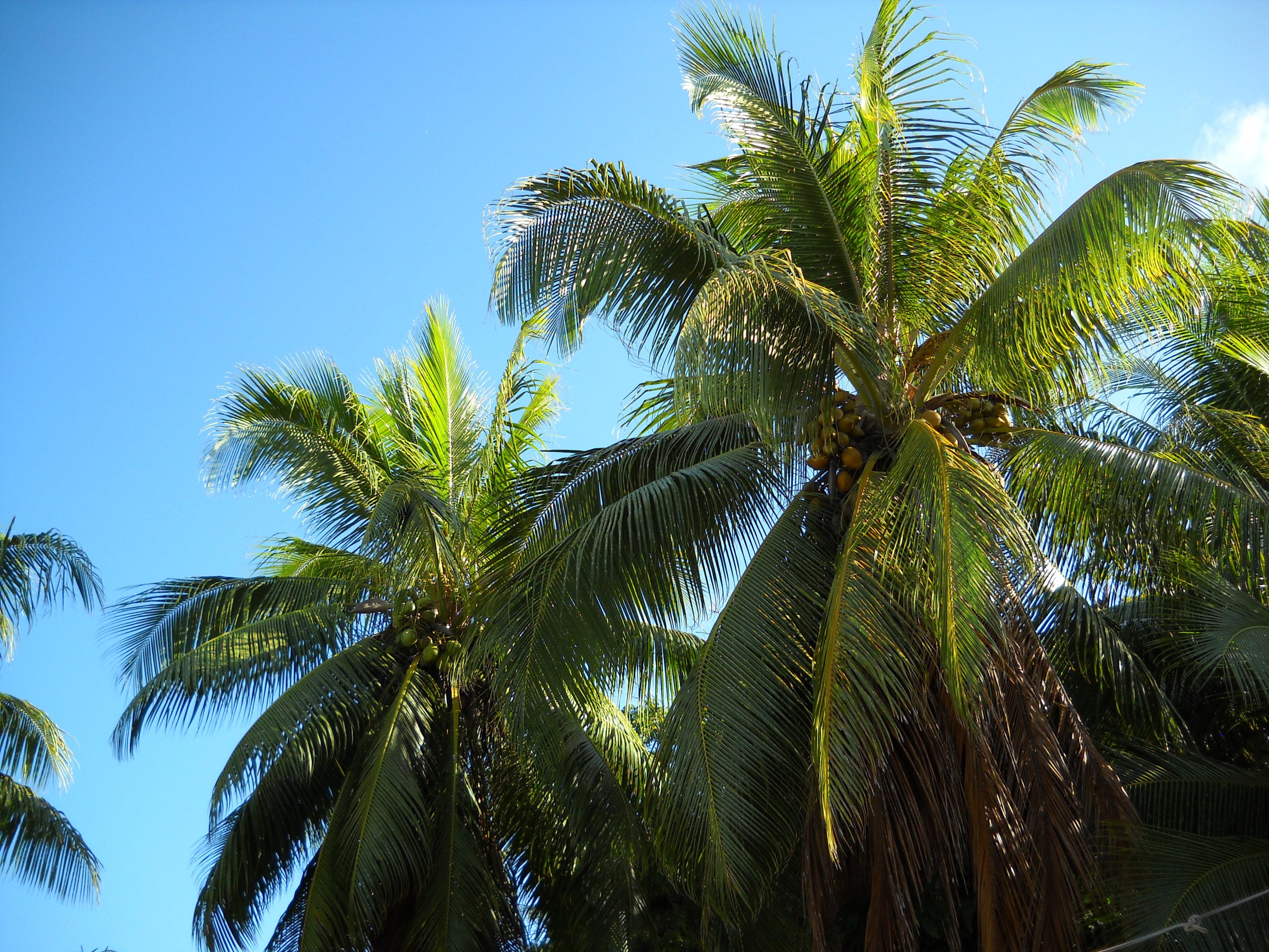 tropicalvanuatu