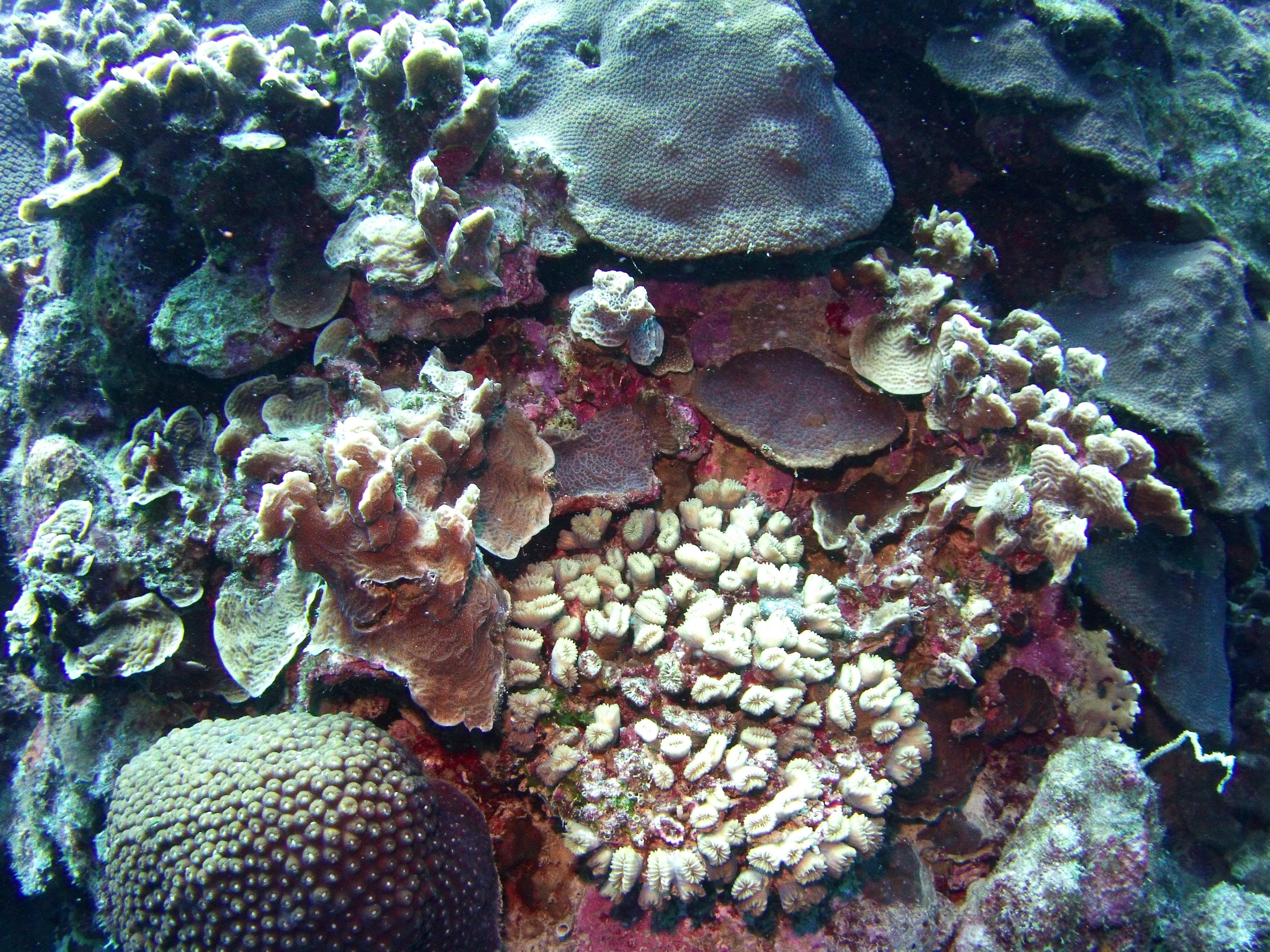 coral,sponge