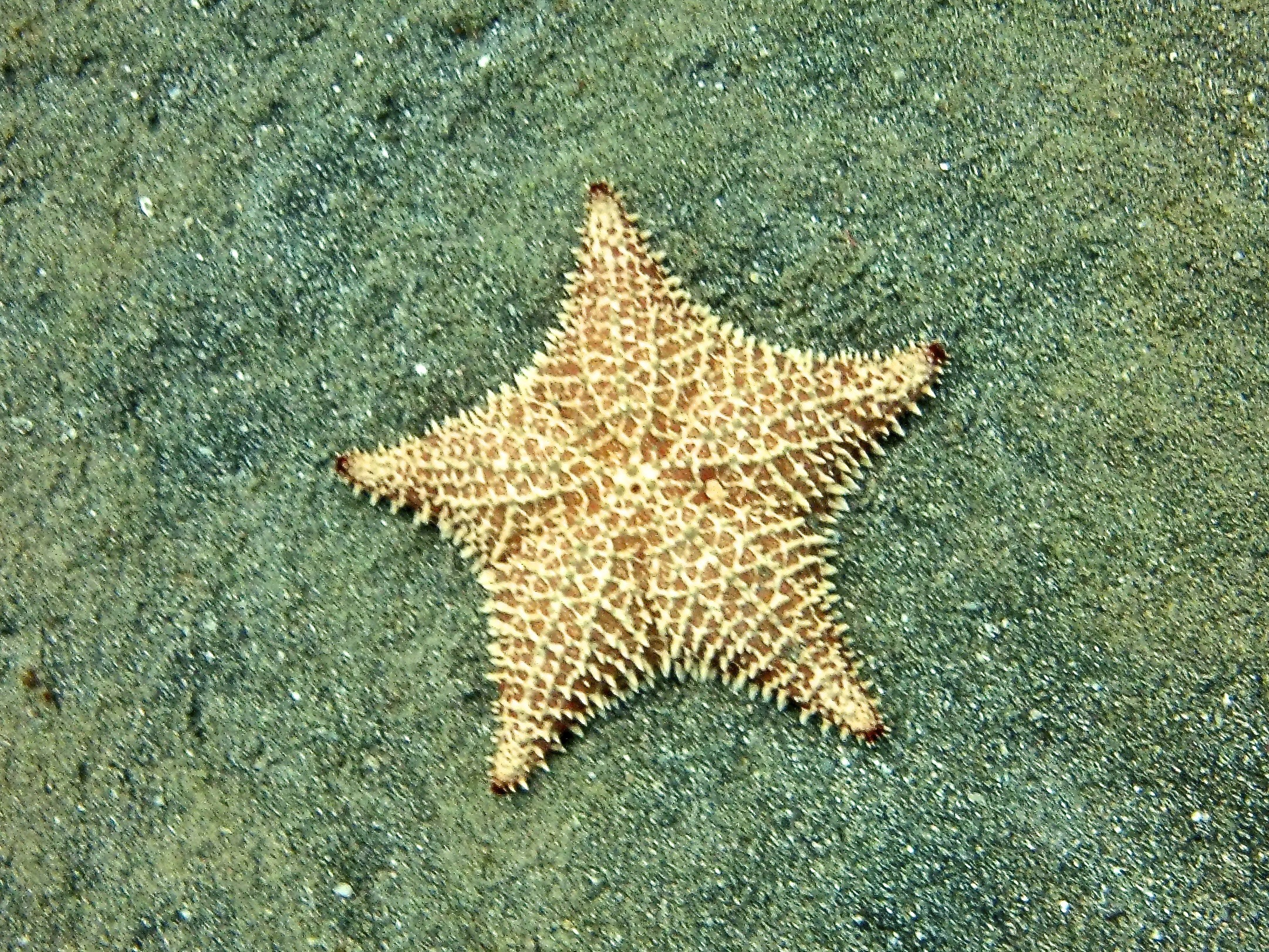 Star_Honduras