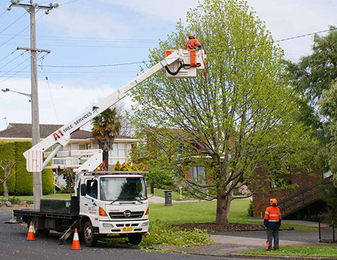 A1 Tree Services Powerlines