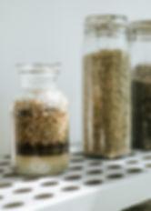 Wildkräuter. Bio. Heimische Zutaten. Nahrungsergänzung. Natürlich. Hausmittel. Alte Rezeptur
