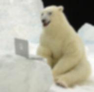 PolarBear1a.jpg