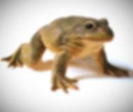 webccfrog1_edited_edited_edited_edited.j