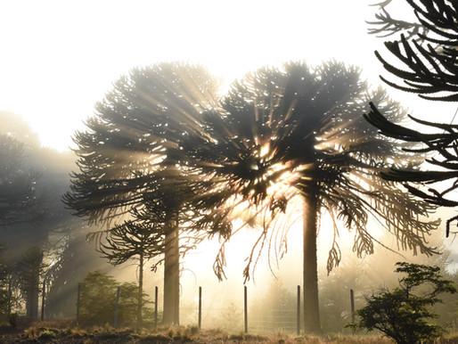 ¿Por qué es importante la Biodiversidad Nativa?