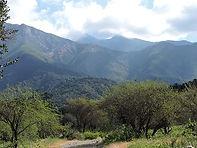 El bosque esclerófilo, ubicado en la zon