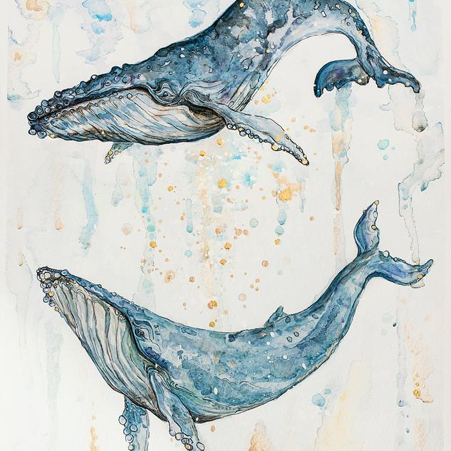 Pár velryb