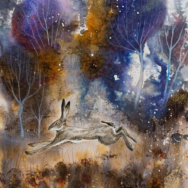 Zajíc v magickém lese