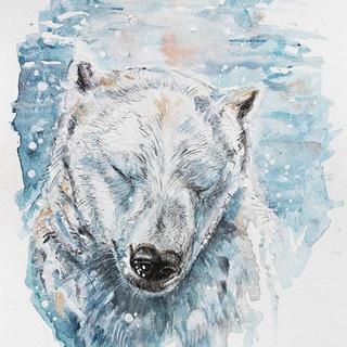 Medvěd pláče pod vodou