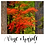 Thumbnail: Vine Maple, from the PNW Collection