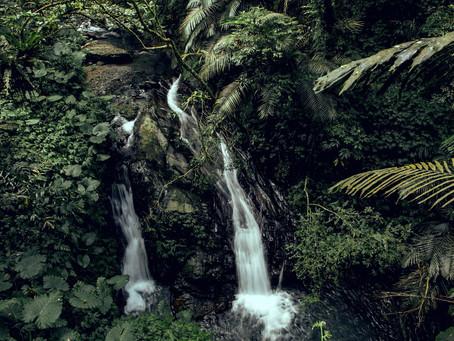 『番茄選誌』輕裝便可遊歷的原始森林 — 林美石磐步道