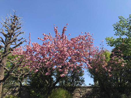 「4月6日開催 リーダーのための言霊塾 入門編 オンライン」のご感想を紹介いたします。