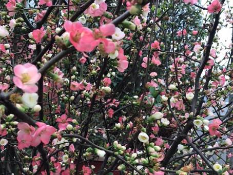 花を愛でるつもりが異界への散歩譚