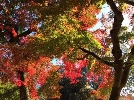 京都・奈良 夢を上げる旅