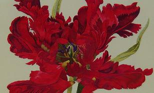coeur_tulipe_perroquet_redouté.jpg