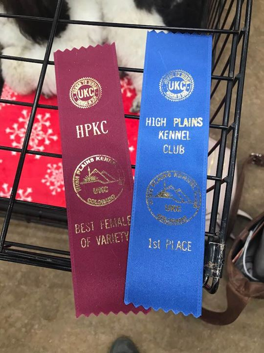 Day 3- 1st in puppy class and Best Femal