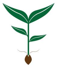 Seed and Sapling