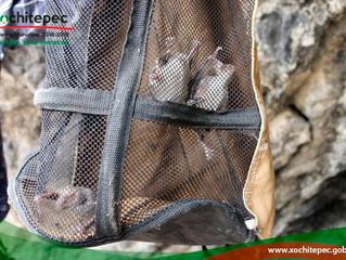 Impulsa Xochitepec campañas contra rabia en bovinos