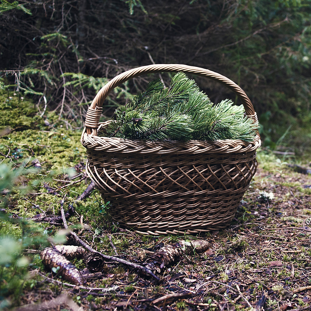Basket of Slovenian mountain pine for distilling process