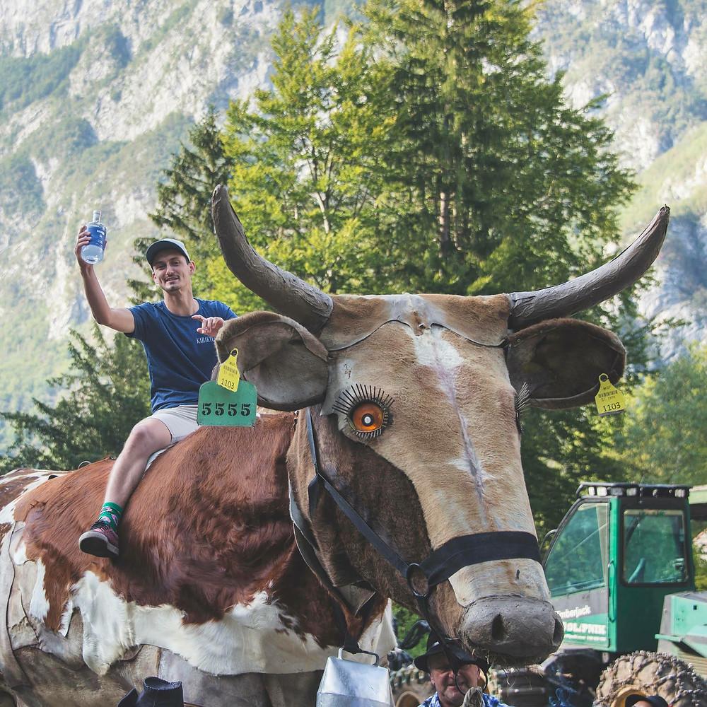 Urban from Karakter distillery sitting on an artificial cow from Kravji Bal event
