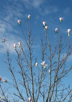 magnoliablommor i papper