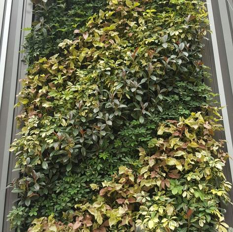 植物牆 案例27
