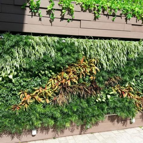 植物牆 案例14