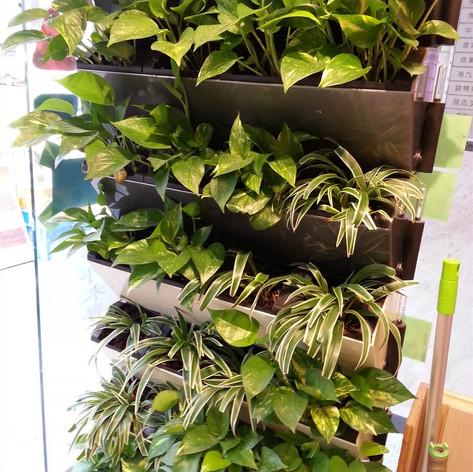 植物牆 案例1