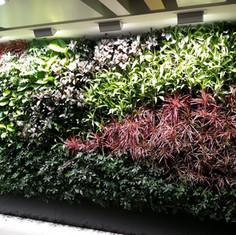 植物牆 案例3