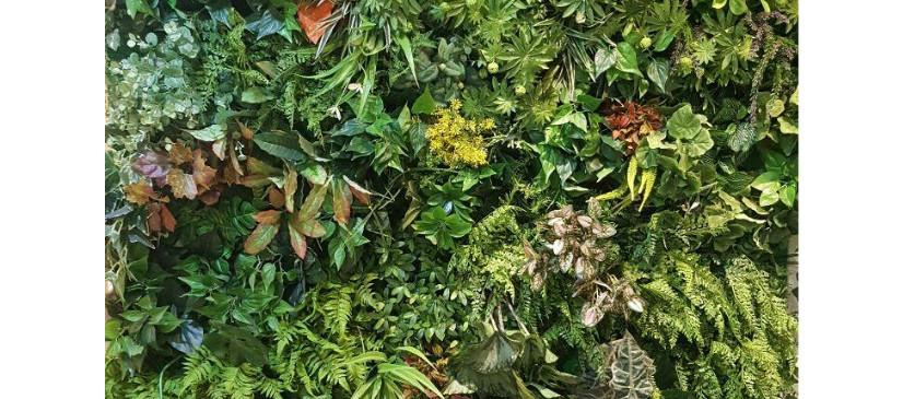 Green Wall3.jpg