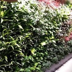 植物牆 案例4