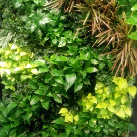 植物牆 案例16