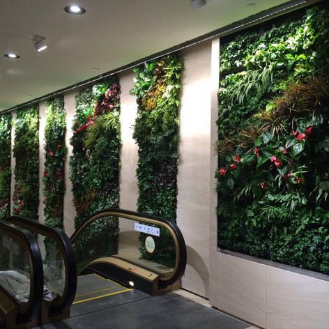 植物牆 案例10