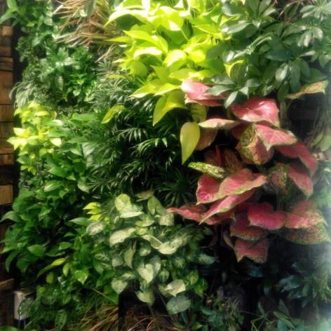 植物牆 案例28