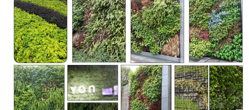 Green Wall7.jpg