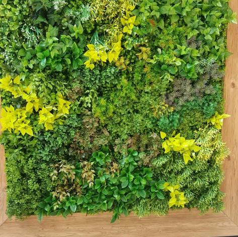 植物牆 案例21