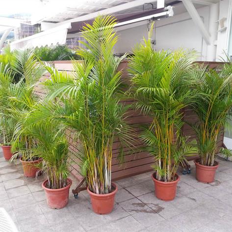 沙田中央大會堂餐廳戶外欄柵11