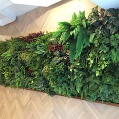 植物牆 案例20