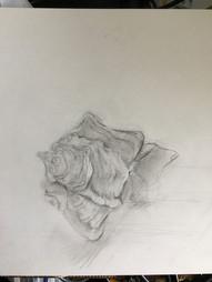Jack Heaton-Shell drawing.jpg
