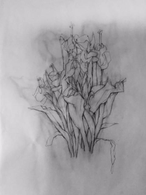 Mary Freedman-Drawn.jpg