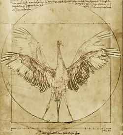 da-vinci-vitruvian-crane
