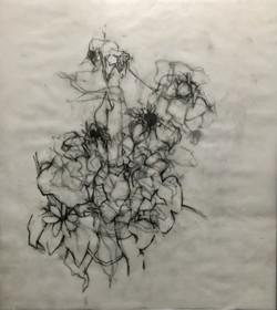 mary freedman drawing