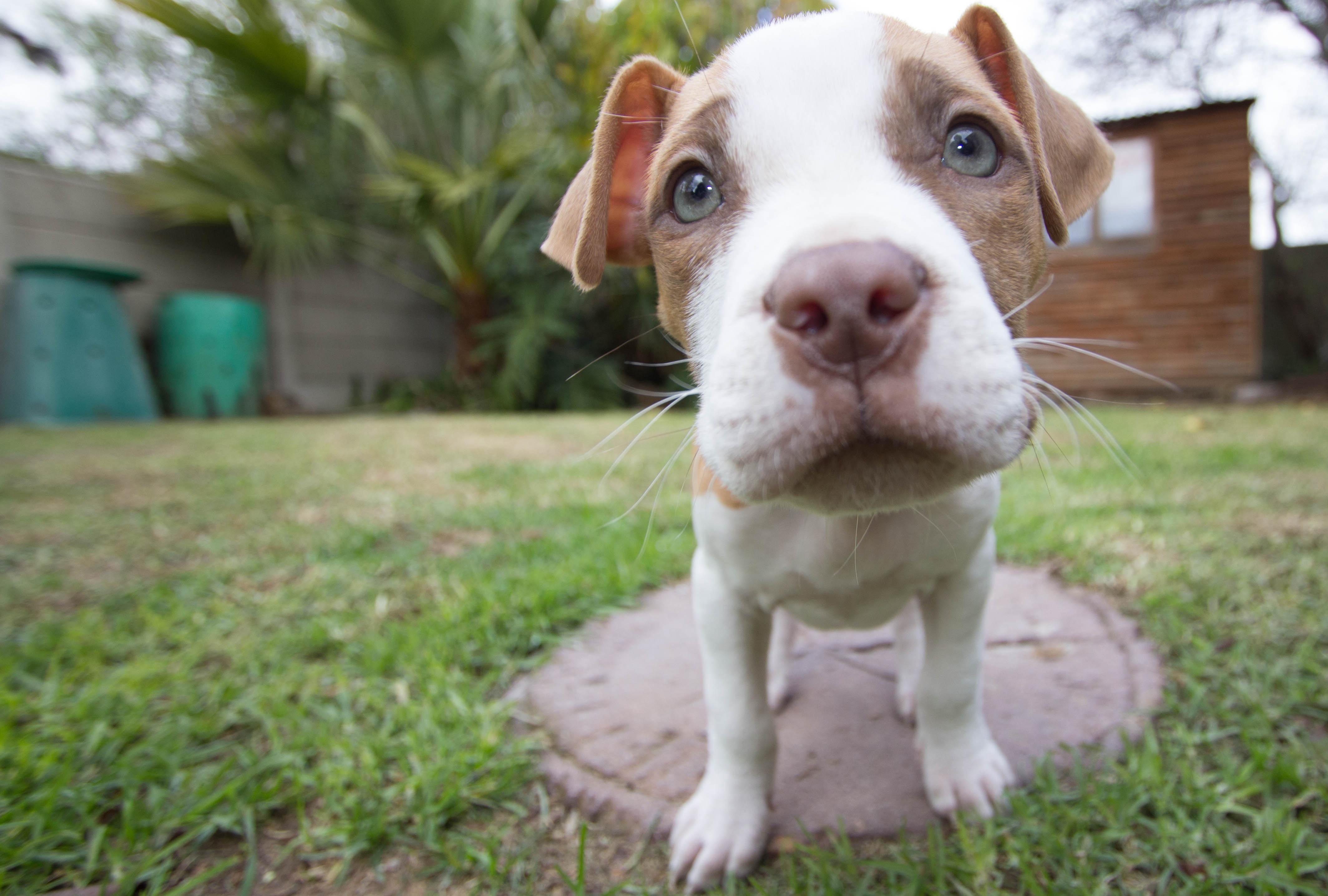 puppy-140306.jpg